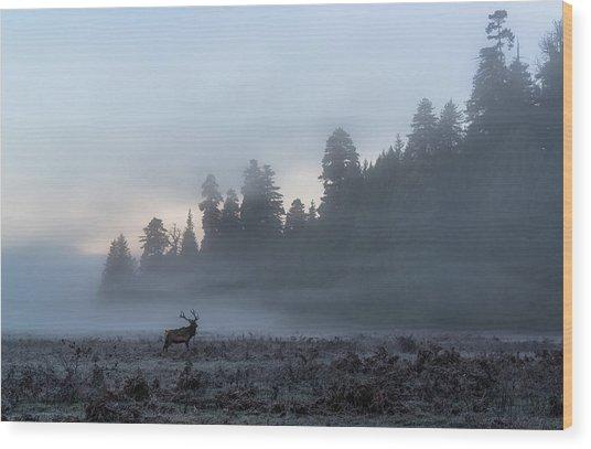Mystic Elk Wood Print