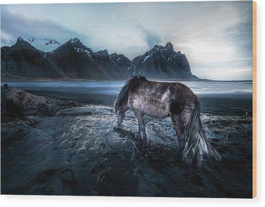Mystic Icelandic Horse Wood Print