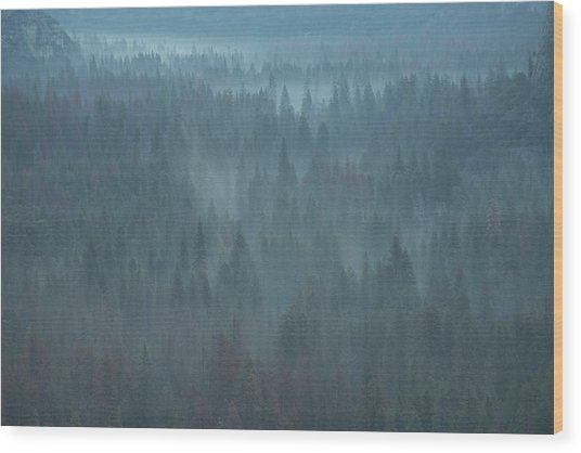 Mystical Forest Wood Print