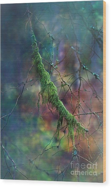 Mystical Moss - Series 1/2 Wood Print