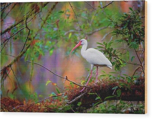 Mystical White Ibis Wood Print