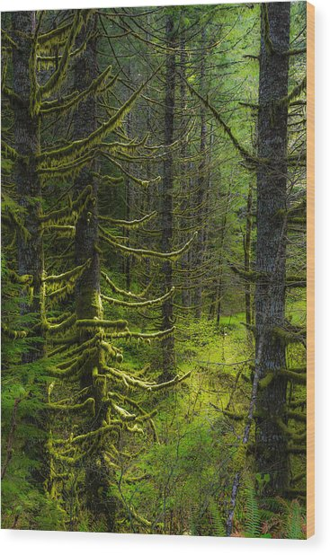 Wood Print featuring the photograph Mystique by Chuck Jason