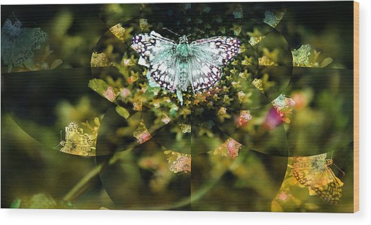 Mythical Butterfly  Wood Print