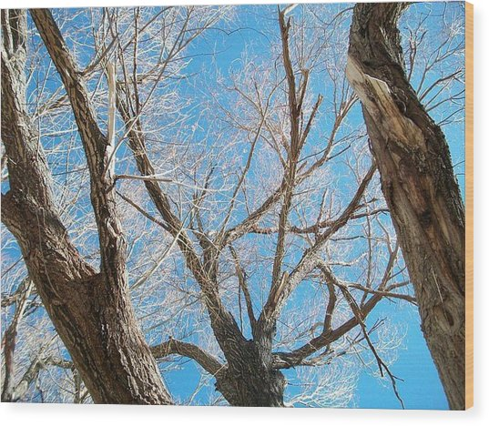 Naked Wood Print by Jacqueline Lewis