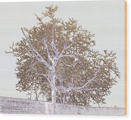 Naked Limbs Wood Print by Gerry Tetz
