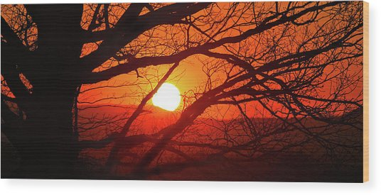 Naked Tree At Sunset, Smith Mountain Lake, Va. Wood Print