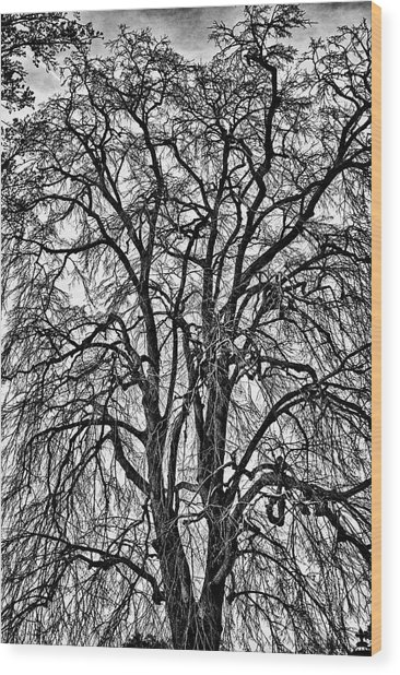 Naked Tree On Capitol Hill Wood Print