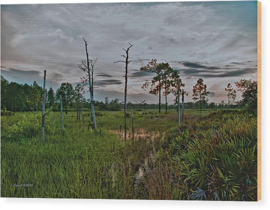Naked Trees Swamp Wood Print