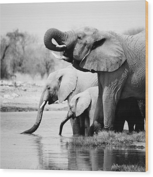 Namibia Elephants Wood Print by Nina Papiorek