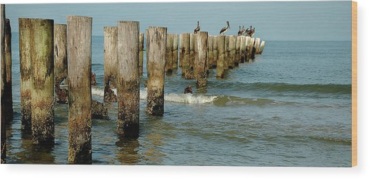 Naples Pier And Pelicans Wood Print