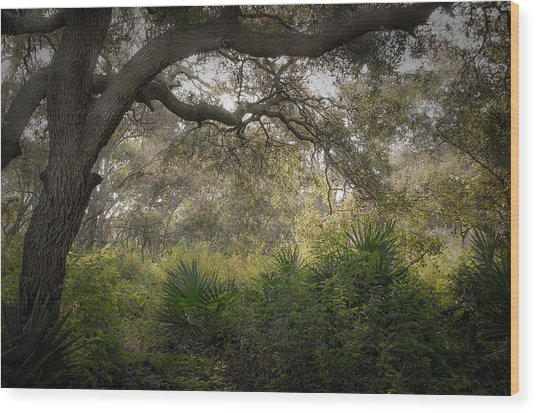 Naples Preserve Wood Print
