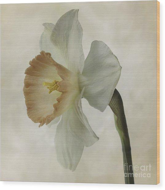 Narcissus 'precocius Wood Print