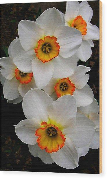Narcissus Tazetta Wood Print