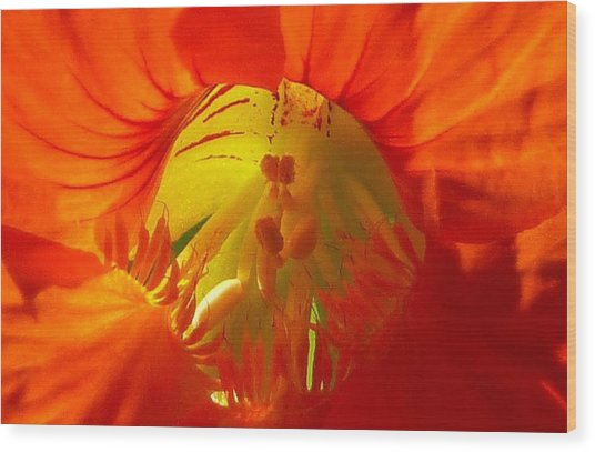 Nasturtium Inner Light Wood Print by Lori Seaman