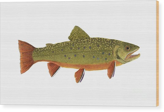 Native Brook Trout Wood Print