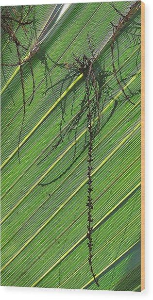 Natural 11 15b Wood Print