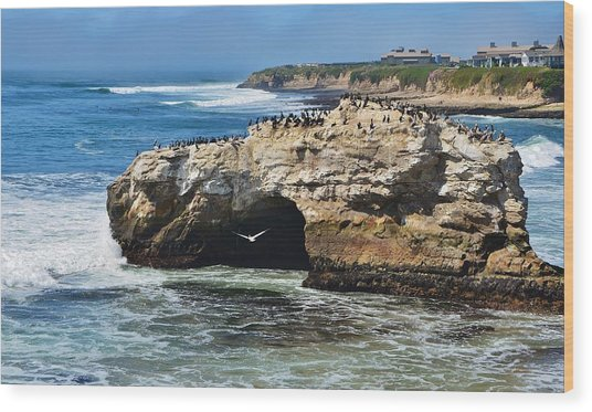 Natural Bridges Santa Cruz Wood Print