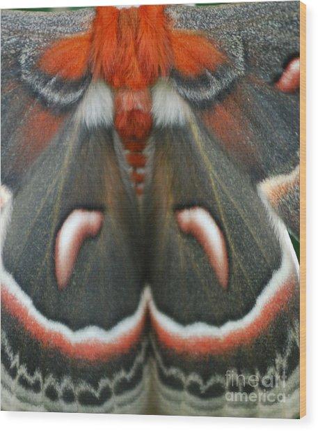 Natural Creation Wood Print