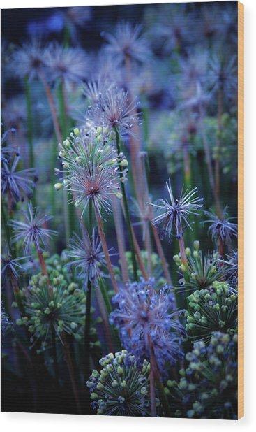 Natural Fireworks 4791 H_2 Wood Print