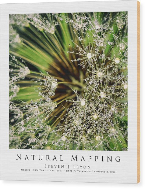 Natural Mapping Wood Print by Steven Tryon