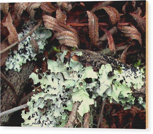 Natural Still Life #1 Wood Print
