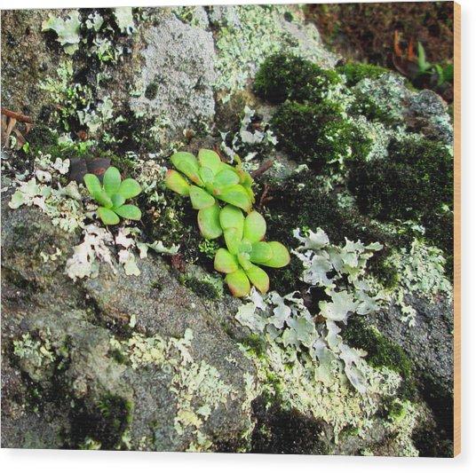 Natural Still Life #3 Wood Print