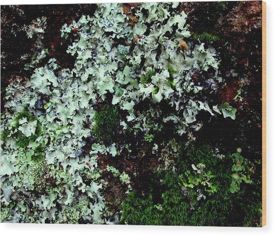Natural Still Life #6 Wood Print