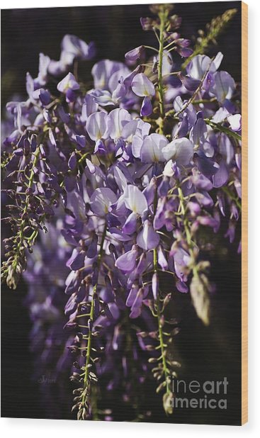 Natural Wisteria Bouquet Wood Print