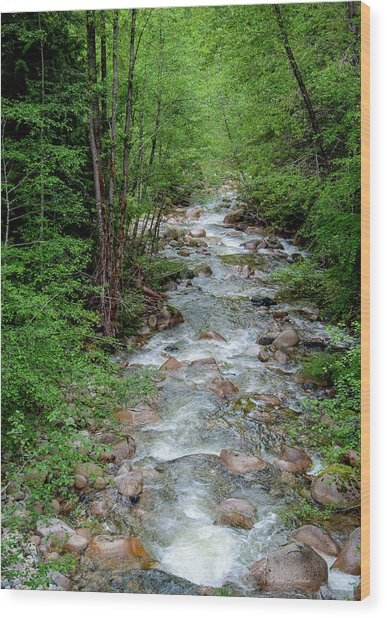Naturally Pure Stream Backroad Discovery Wood Print