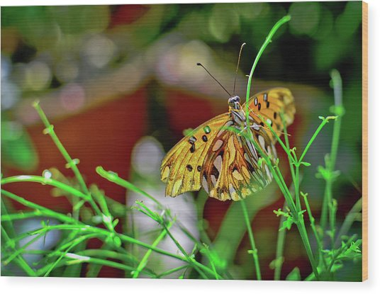 Nature - Butterfly And Plants Wood Print