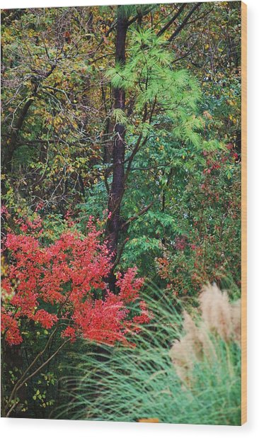 Nature In All Her Beauty Wood Print by Trudi Southerland