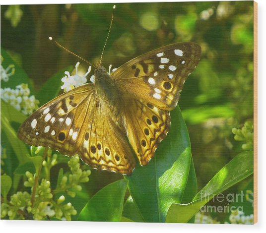 Nature In The Wild - Kaleidoscope Of Color Wood Print by Lucyna A M Green