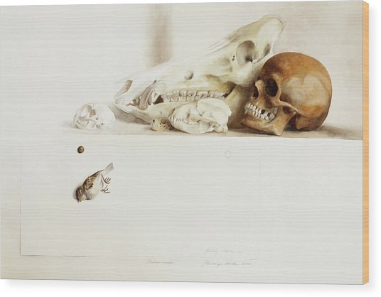 Nature Morte Wood Print