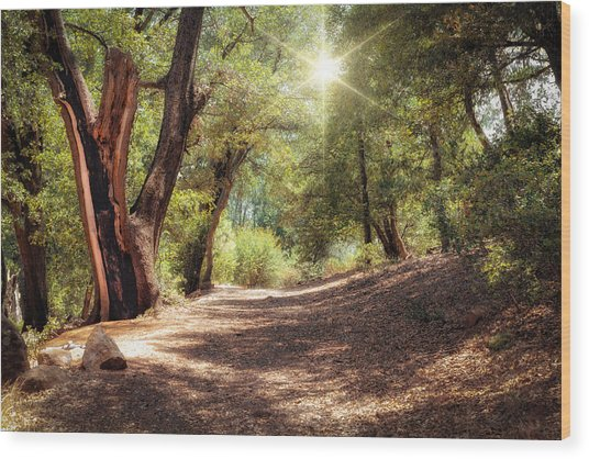Nature Trail Wood Print