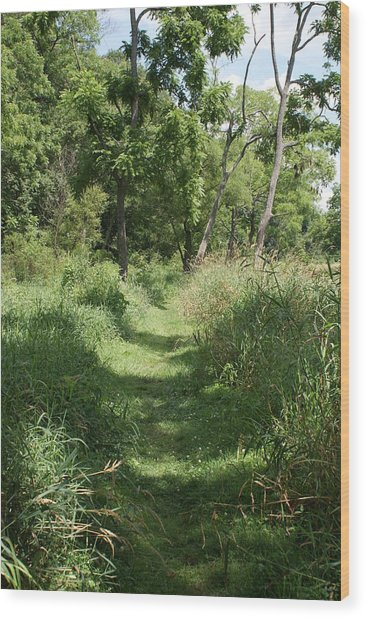 Nature Trail Wood Print by Heather Green
