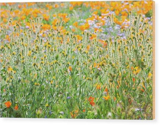 Nature's Artwork - California Wildflowers Wood Print