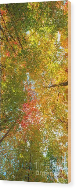 Natures Canopy Of Color Wood Print