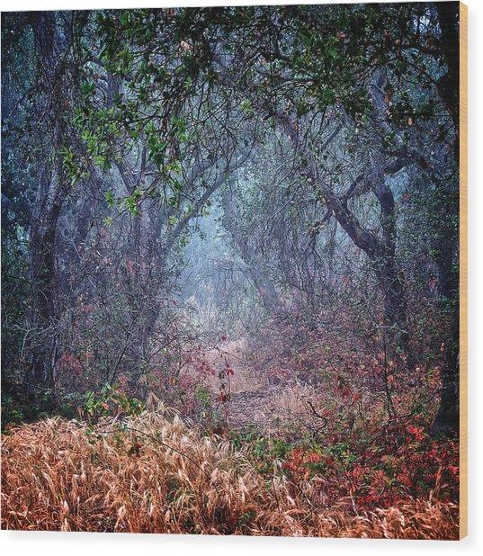 Nature's Chaos, Arroyo Grande, California Wood Print