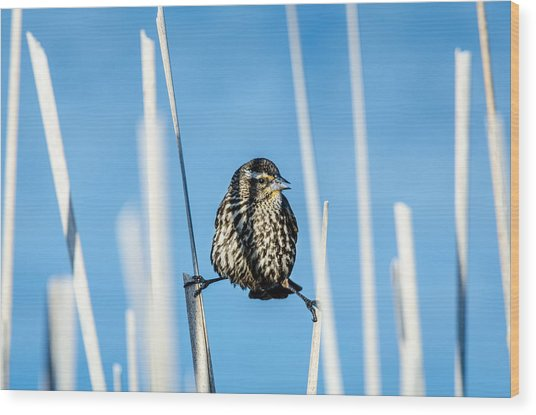 Wood Print featuring the photograph Nature's Circus by Steven Santamour