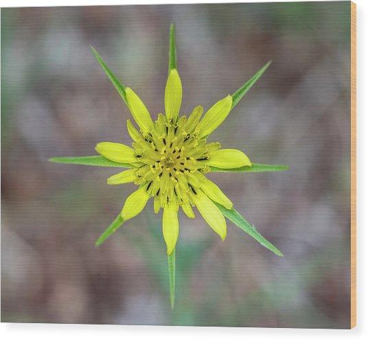 Nature's Compass Wood Print