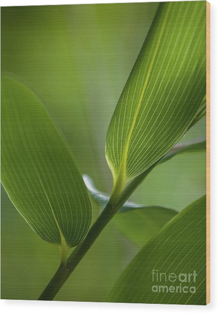 Natures Green Palette Four Wood Print