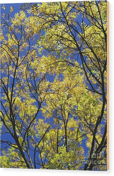 Natures Magic - Original Wood Print