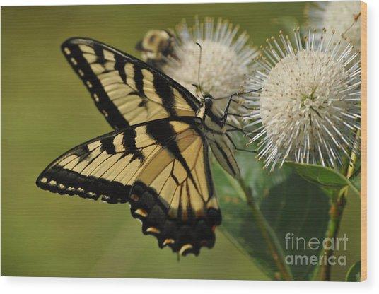 Natures Pin Cushion Wood Print