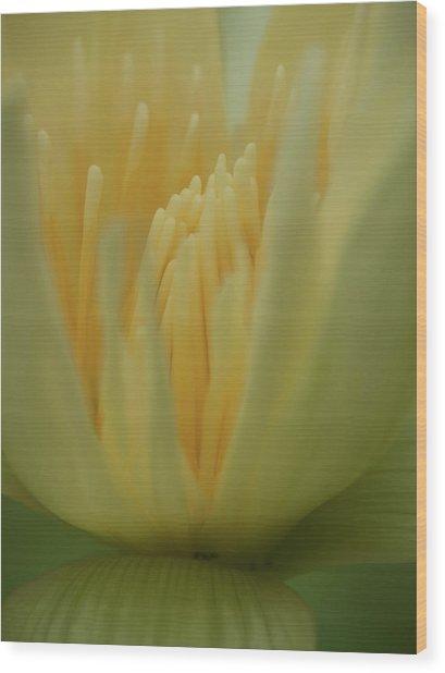 Natures Reflection Wood Print
