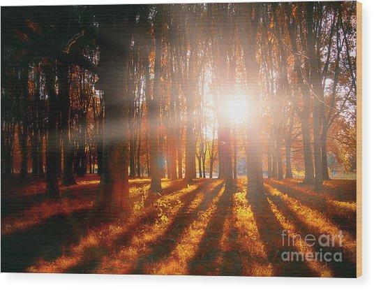 Nature's Shadows Wood Print by Alessandro Giorgi Art Photography