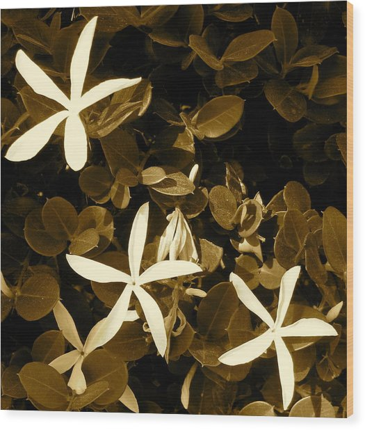 Nature's Stars Wood Print by Ashley Butler