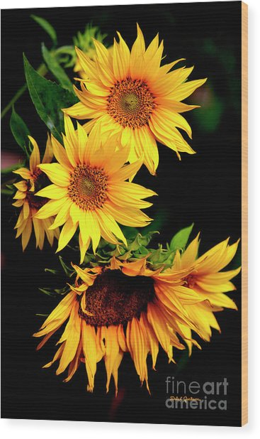 Natures Sunflower Bouquet Wood Print