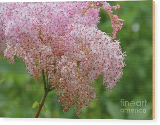 Natures Untouched Beauty Wood Print