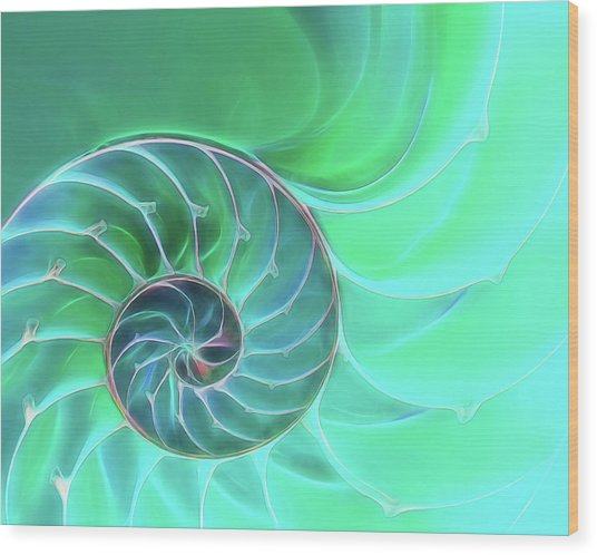 Nautilus Aqua Spiral Wood Print