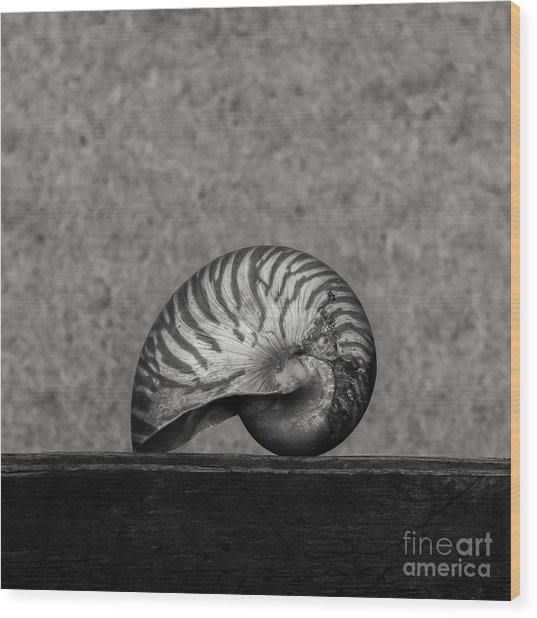 Nautilus Wood Print